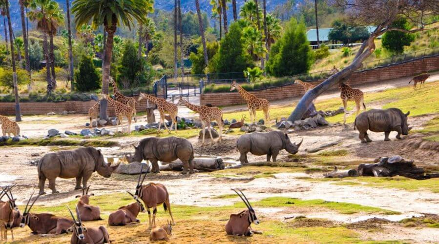 Various safari animals